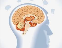 七种饮食习惯大脑老得慢!